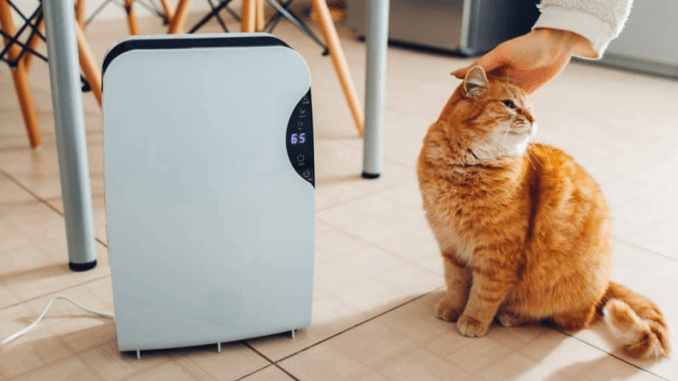 Does air purifier help with cat allergies