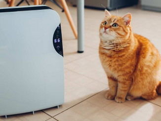 air purifier for cat dander