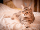 Are Air Purifiers Safe For Pets